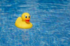 Yellow rubber duck in blue swimming pool. Closeup view Stock Photo