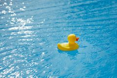 Yellow rubber duck in blue swimming pool Royalty Free Stock Images