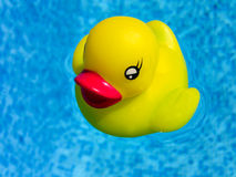 A yellow rubber duck Royalty Free Stock Photo