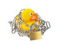 Yellow Rubber Duck with chain and padlock Royalty Free Stock Photography