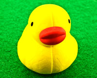 Yellow rubber duck Stock Images