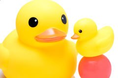 Yellow rubber duck with colorful ball. In isolate white background Royalty Free Stock Images