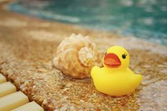 Yellow rubber duck with conch at swimming pool. Stock Photography