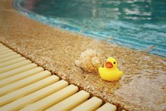 Yellow rubber duck with conch at swimming pool. Stock Photo