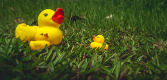 Yellow rubber duck and the ducklings Stock Photo