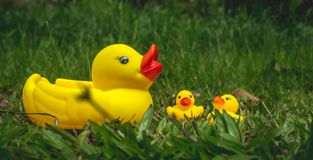 Yellow rubber duck and the ducklings Royalty Free Stock Image