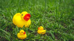 Yellow rubber duck and the ducklings Royalty Free Stock Images