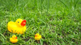 Yellow rubber duck and the ducklings Stock Photography