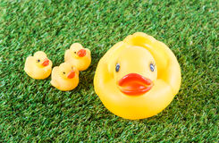 Yellow rubber duck Royalty Free Stock Photos