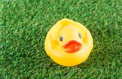 Yellow rubber duck Stock Photo