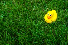 Yellow rubber duck on a green lawn Stock Image