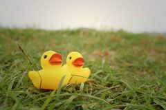 Yellow rubber duck on greengrass background. Royalty Free Stock Photography