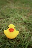 Yellow rubber duck on greengrass background. Stock Photography