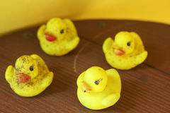Yellow rubber duck at groups Stock Photos