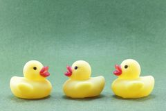 The yellow rubber duck. Has a white, black or green background royalty free stock photography