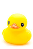 Yellow rubber duck. Isolated on white royalty free stock image