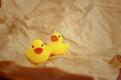 Yellow rubber duck on a light brown background. Royalty Free Stock Images