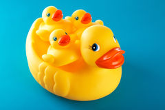 Yellow rubber duck and little ducky isolated on blue Royalty Free Stock Image