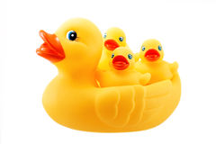 Yellow rubber duck and little ducky isolated on white Stock Photos