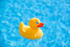 Yellow rubber duck. Little yellow rubber duck floating in the blue water of a swimming pool royalty free stock photos