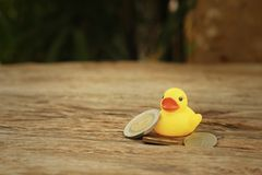 Yellow rubber duck with money of Thai Bath. Stock Images