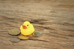 Yellow rubber duck with money of Thai Bath. Royalty Free Stock Photo