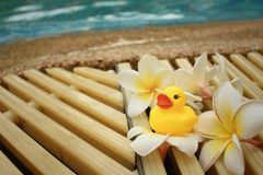 Yellow rubber duck with pluemeria flowers at swimming pool. Royalty Free Stock Photos