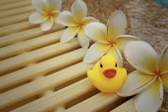 Yellow rubber duck with pluemeria flowers at swimming pool. Stock Photos