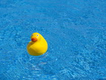 Yellow rubber duck in a pool Stock Photo