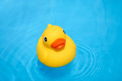 Yellow rubber duck in the pool Stock Photography