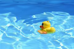 Yellow rubber duck in the pool in the summer. Beautiful clear blue water and background for travel and holidays. Royalty Free Stock Image