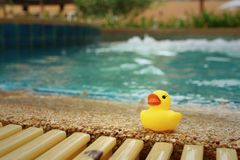 Yellow rubber duck at the swimming pool. Stock Photos
