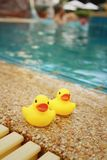 Yellow rubber duck at the swimming pool. Royalty Free Stock Images