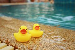 Yellow rubber duck at the swimming pool. Royalty Free Stock Photography