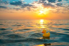 Free Yellow Rubber Duck Toy Floating In Sea Water. Beautiful Sunrise On The Beach Royalty Free Stock Images - 157728499