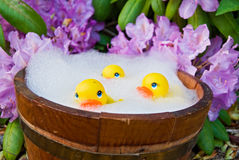 Yellow rubber duck in tub Royalty Free Stock Photo