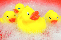 Yellow rubber duckies. Floating in soapy water Royalty Free Stock Photography