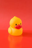 yellow rubber duckling Stock Image