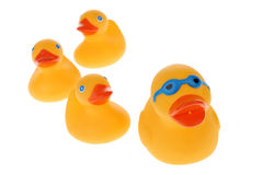 Yellow rubber ducks Stock Photos