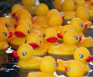 Yellow Rubber Ducks Floating in a Pool Stock Photo