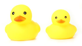 Yellow Rubber Ducks isolated Stock Images