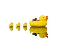 Yellow rubber ducks Stock Image