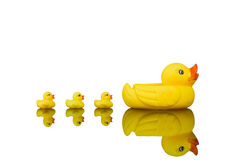 Yellow rubber ducks Royalty Free Stock Image