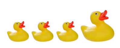 Yellow rubber ducks Royalty Free Stock Photos