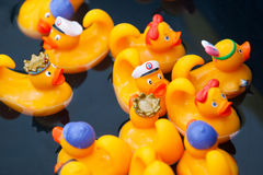 Yellow rubber ducks in the kiddie pool royalty free stock images