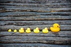 Yellow rubber ducks in a row. Placed on ancient wooden rustic bridge outdoors in park or forest. Family safety concept Stock Photography
