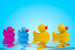 Yellow rubber ducks in water. Royalty Free Stock Photography