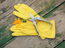 Yellow rubber gloves, lily and garden pruner on wooden backgroun Royalty Free Stock Image