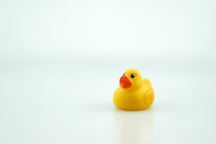 Yellow rubber toy duck Stock Photos