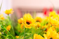 Yellow Rudbeckia flower with blurred background. royalty free stock photos